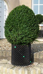 Bellamont Topiary - Eggs
